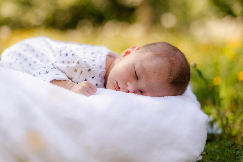 Newborn on a meadow